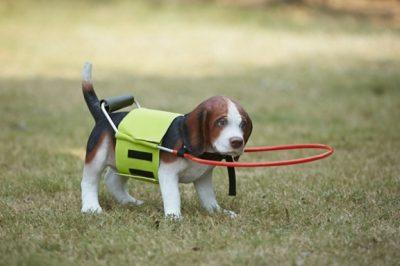 4.ห่วงกันชนสำหรับสุนัขมีปัญหาทางสายตา